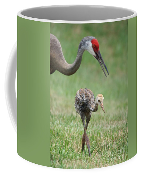 Sandhill Crane Coffee Mug featuring the photograph Mama And Juvenile Sandhill Crane by Carol Groenen