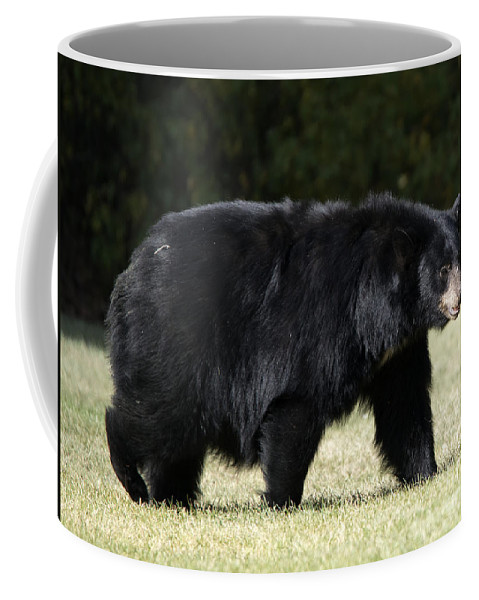 Black Bear Coffee Mug featuring the photograph Mama Bear by Mike Dawson