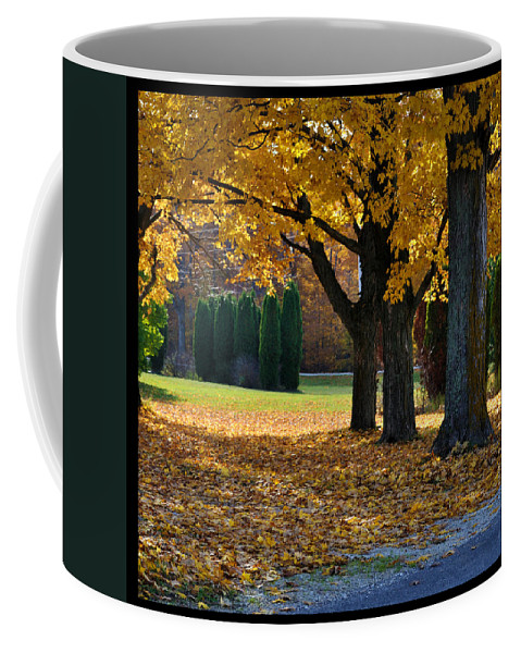 Trees Coffee Mug featuring the photograph Maple And Arborvitae by Tim Nyberg