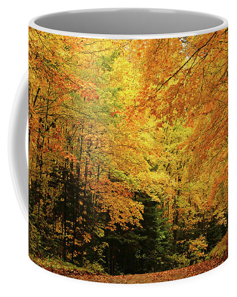 Minnesota Maples Coffee Mug featuring the photograph Maple Blaze by Bill Morgenstern