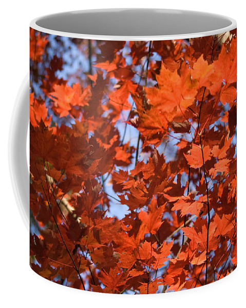 Maple Coffee Mug featuring the photograph Maple Leaves Aglow by Douglas Barnett