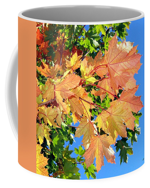 Autumn Coffee Mug featuring the photograph Maple Mania 1 by Will Borden