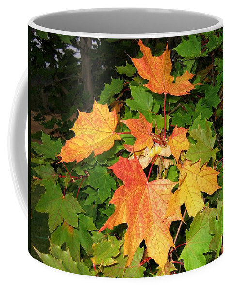 Maple Leaves Coffee Mug featuring the photograph Maple Mania 10 by Will Borden