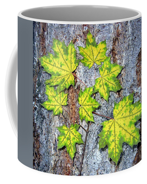 Autumn Coffee Mug featuring the photograph Maple Mania 12 by Will Borden