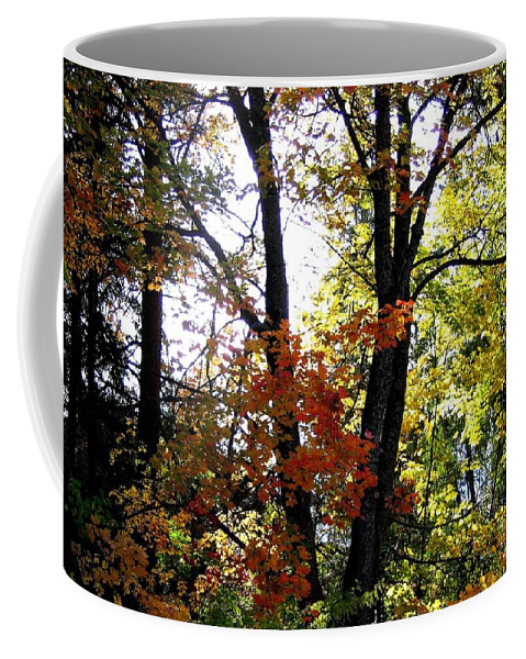 Autumn Coffee Mug featuring the photograph Maple Mania 16 by Will Borden