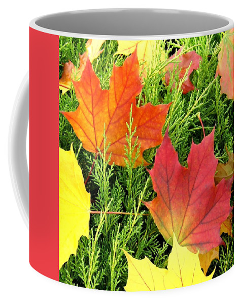 Autumn Coffee Mug featuring the photograph Maple Mania 5 by Will Borden