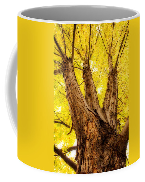 Autumns Coffee Mug featuring the photograph Maple Tree Portrait 2 by James BO Insogna