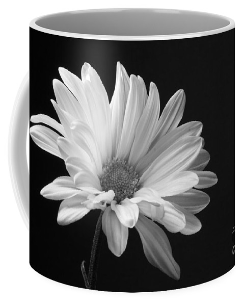 Marguerite Coffee Mug featuring the photograph Marguerite Daisy by Kelly Holm