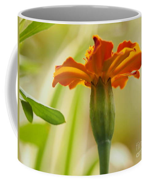 Flowers Coffee Mug featuring the photograph Marigold On A Lovely Spring Day by Dorothy Lee