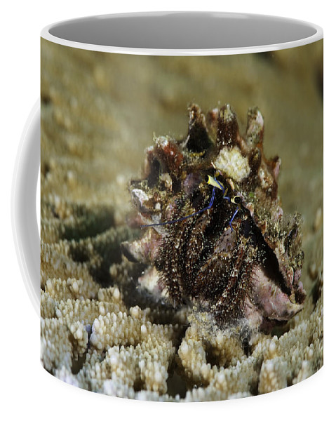 Marine Life Coffee Mug featuring the photograph Marine Hermit Crab by Anthony Totah