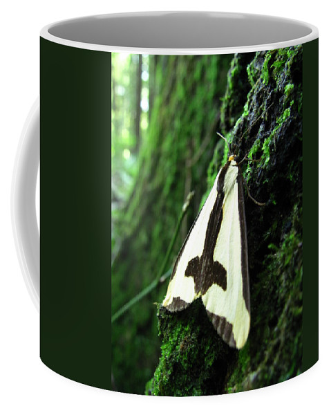Maryland Clymene Moth Images Old Growth Forest Ecosystem Bowleys Quarters Clymene Moth Photograph Prints Biodiversity Nature Mature Forest Ecology Moths Of Maryland Forest Complexity Insect Diversity Forest Life In The Trees Coffee Mug featuring the photograph Maryland Clymene Moth by Joshua Bales