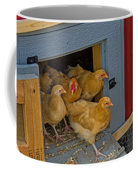 Farm Coffee Mug featuring the photograph Aunt Mary's Chickens by Alana Thrower