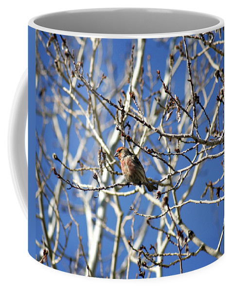 Bird Coffee Mug featuring the photograph Mate In Waiting by Marilyn Hunt