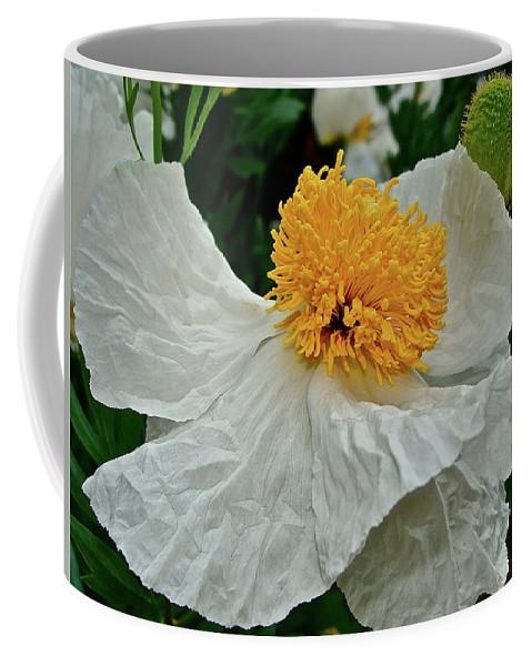 Flower Coffee Mug featuring the photograph Matilija Poppy by Diana Hatcher