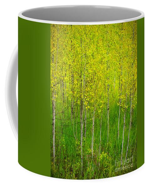 Trees Coffee Mug featuring the photograph May 25 2010 by Tara Turner