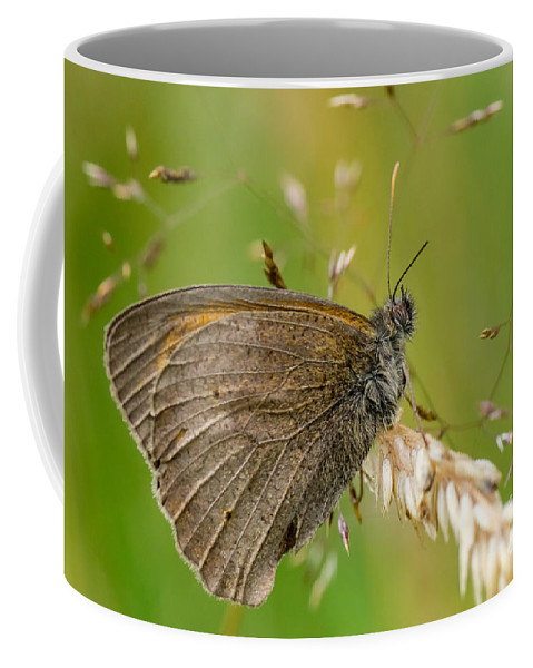 Bruin Zandoogje Coffee Mug featuring the photograph Meadow Brown by Brothers Beerens