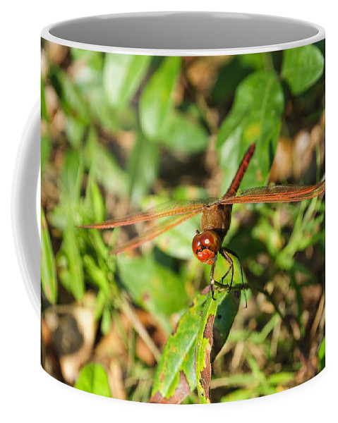 Dragonfly Coffee Mug featuring the photograph Meadowhawk Dragonfly by Kenneth Albin