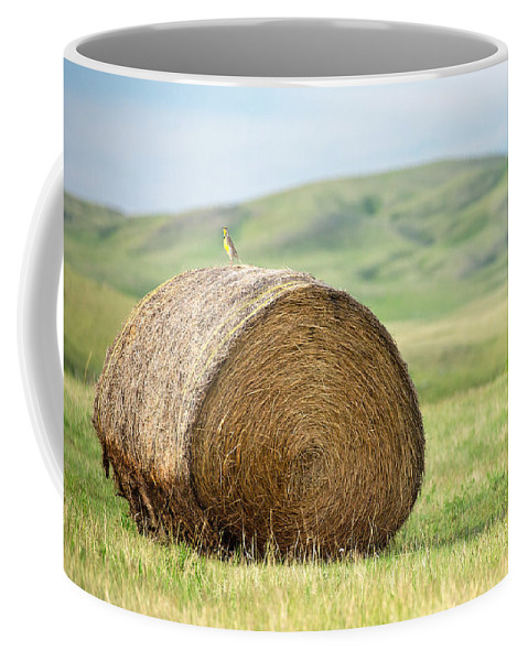 Round Bale Coffee Mug featuring the photograph Meadowlark Heaven by Todd Klassy