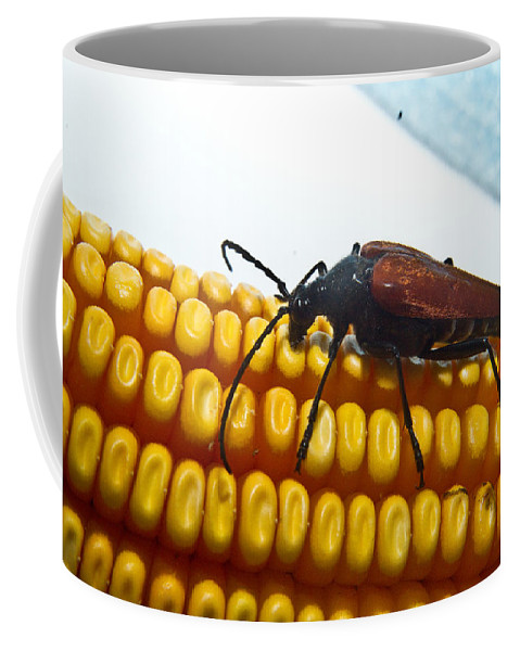 Corn Coffee Mug featuring the photograph Meal Time by Douglas Barnett