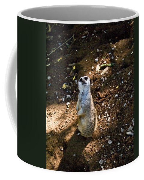 Meerkat Coffee Mug featuring the photograph Meerkat   Say What by Douglas Barnett
