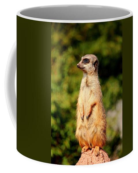 Meerkat Coffee Mug featuring the photograph Meerkat by Heike Hultsch