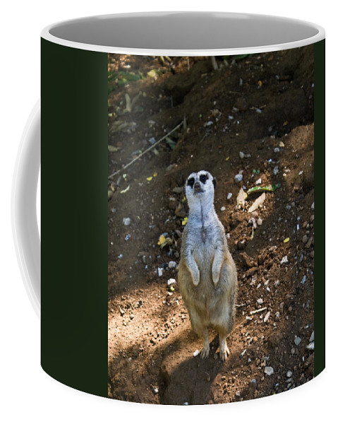 Meerkat Coffee Mug featuring the photograph Meerkat Poising by Douglas Barnett