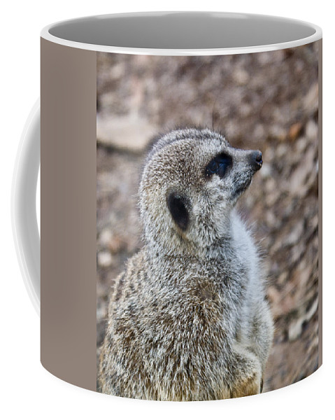 Meerkat Coffee Mug featuring the photograph Meerkat Portrait by Douglas Barnett