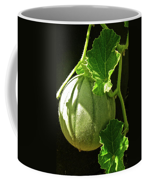 Photograph Of Melon Coffee Mug featuring the photograph Mellow Mellon by Gwyn Newcombe