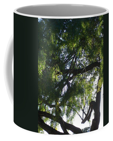Mesquite Tree Coffee Mug featuring the photograph Mesquite Tangle by Laurette Escobar