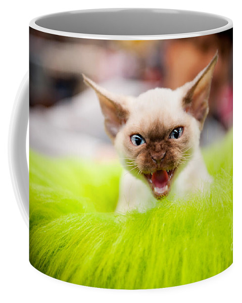 Cat Coffee Mug featuring the photograph Mew Kitty Funny Mad Face by Arletta Cwalina
