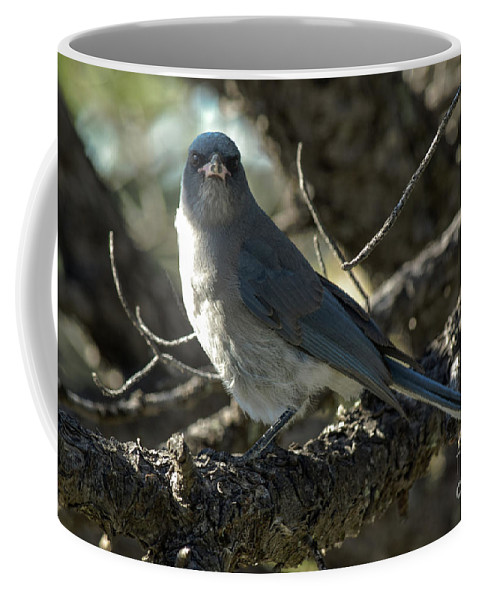 Mexican Jay Coffee Mug featuring the photograph Mexican Jay by Charles Norkoli