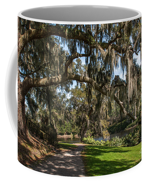 Middleton Coffee Mug featuring the photograph Middleton Live Oak Stretch by Dale Powell