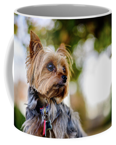 Yorkie Coffee Mug featuring the photograph Mighty Dog by Michael Scott