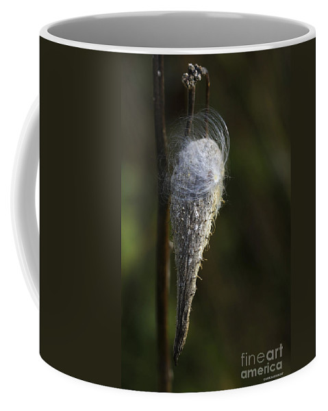 Milkweed Coffee Mug featuring the photograph Milkweed In Autumn by Deborah Benoit