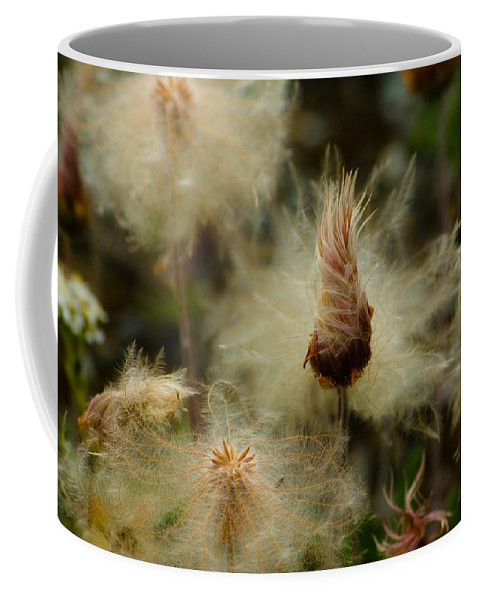 Blowball Coffee Mug featuring the photograph Miracle Flower by Max Steinwald