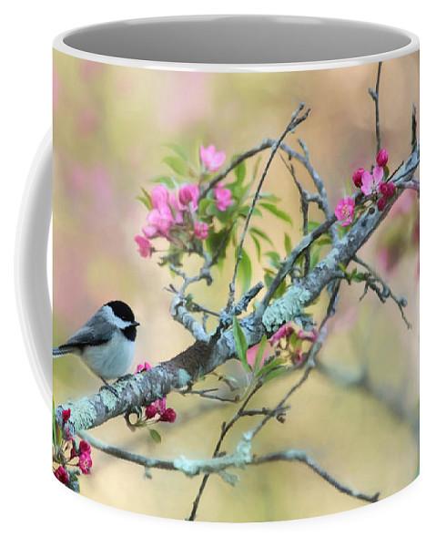 Chickadee Coffee Mug featuring the photograph Miss Chickadee by Lori Deiter