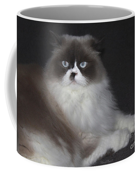 Cat Coffee Mug featuring the photograph Miss Lillie The Kitty by Deborah Benoit