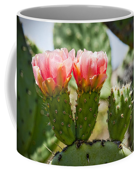 Prickly Pear Cactus Coffee Mug featuring the photograph Missing Triplet by Kelley King