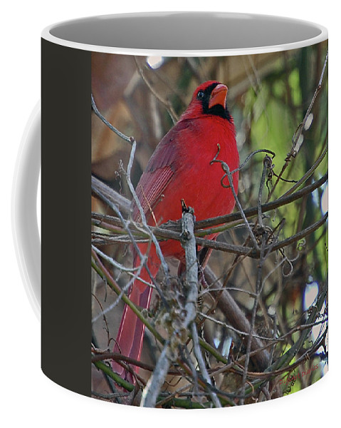 Cardinal Coffee Mug featuring the digital art Mister Cardinal by DigiArt Diaries by Vicky B Fuller