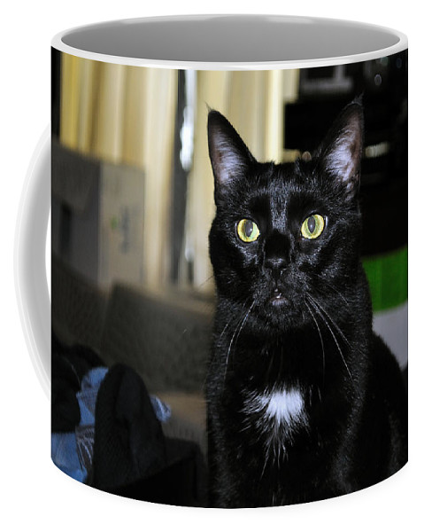 Cat Coffee Mug featuring the photograph Mistress Of The Dark by Kenneth Albin