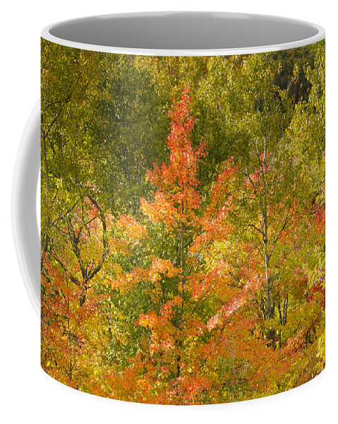 Tree Coffee Mug featuring the photograph Mixed Autumn by Phill Doherty