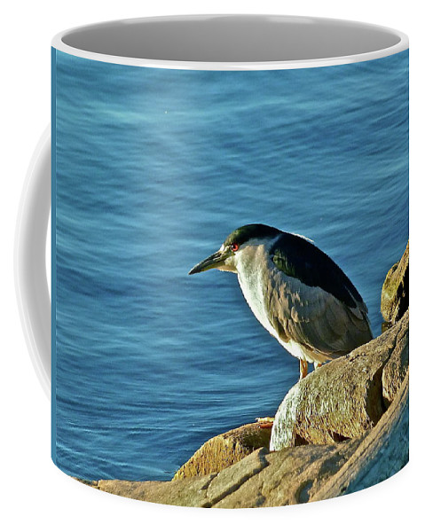 Birds Coffee Mug featuring the photograph Mixed Up by Diana Hatcher