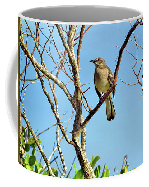 Animal Coffee Mug featuring the photograph Mocking Bird 1 by John Trommer