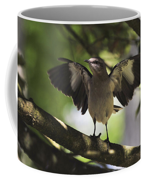 Terry D Photography Coffee Mug featuring the photograph Mockingbird by Terry DeLuco