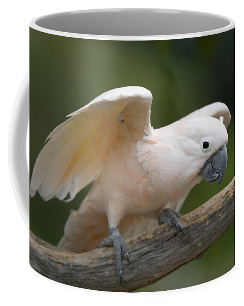 Photography Coffee Mug featuring the photograph Moluccan Cockatoo At The Omaha Zoo by Joel Sartore
