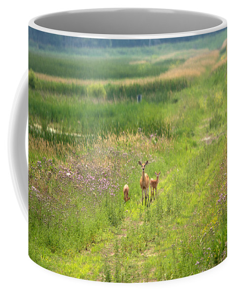 Whitetail Deer Coffee Mug featuring the photograph Mom And The Twins by Linda Kerkau