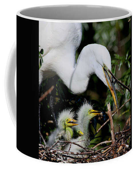 Great White Egret Coffee Mug featuring the photograph Momma Took Our Food by Barbara Bowen