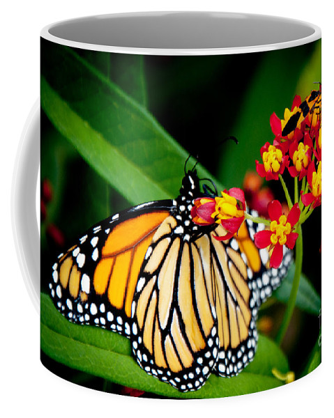 Monarch Butterfly Coffee Mug featuring the photograph Monarch Butterfly At Lunch With 2 Box Elder Bugs by Andee Design