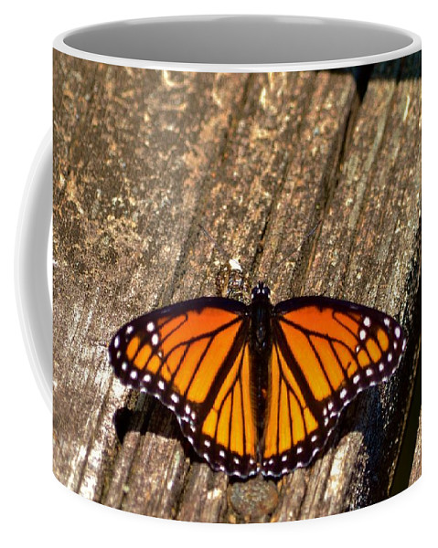 Monarch Coffee Mug featuring the photograph Monarch Butterfly II by Eileen Brymer