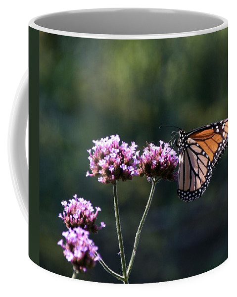 Monarch Butterfly Coffee Mug featuring the photograph Monarch Butterfly IIi by Eric Noa